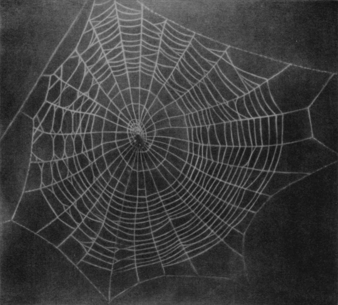 A drawing of a spiderweb in charcoal.